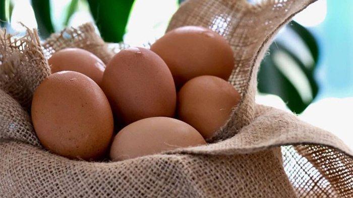 Manfaat telur ayam bagi kesehatan tubuh