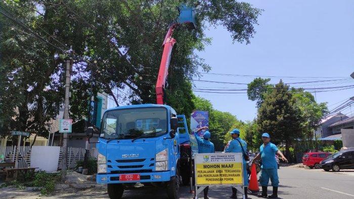 Menjelang Musim Hujan, Pohon-pohon Rawan Tumbang di Kota Cirebon Dipangkas
