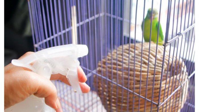 Anda Penggemar Burung Ini Lima Cara Membersihkan Sangkar Burung Yang Benar Tribun Jabar