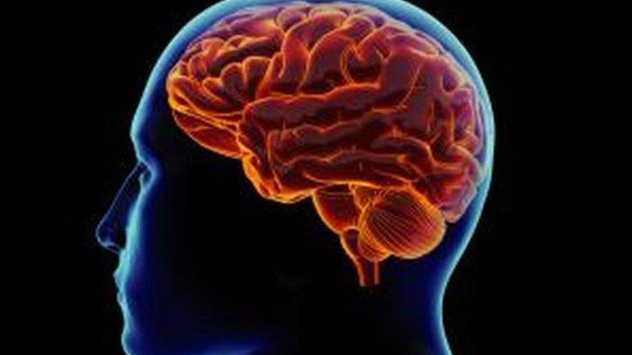 Cara Mudah Tingkatkan Fungsi Otak, Tanpa Gunakan Suplemen