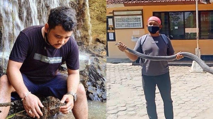 Ular King Kobra Tewaskan Remaja yang Merawatnya, Panji Petualang Tunjukkan Penampakan Ular Ganas Itu