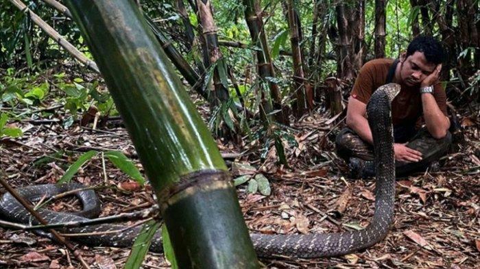 Panji Petualang Perlihatkan King Kobra Garaga ke Rekannya, Ada yang Beda di Mukanya, Disebut 'Cute'