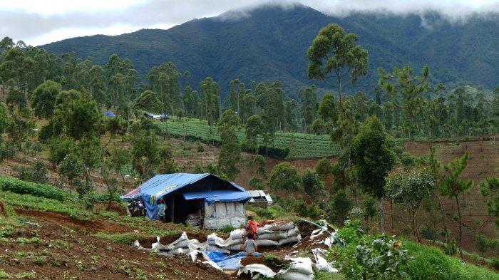Petani di Bandung Terancam Penjara 10 Tahun Garap Kebun Wortel di Cagar Alam Gunung Papandayan