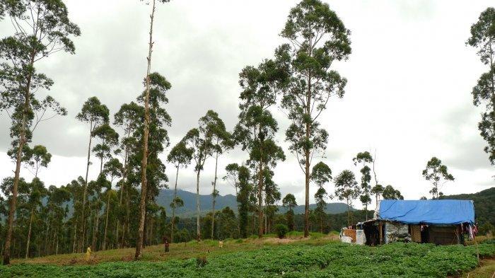Jarang Terjadi, Petani Beraktifitas di Gunung Papandayan Terancam Penjara 10 Tahun