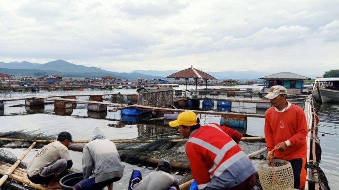 Pecah Rekor, Harga Ikan di Jangari Waduk Cirata Tembus Rp 40 Ribu/Kg, Pertama Kali Terjadi