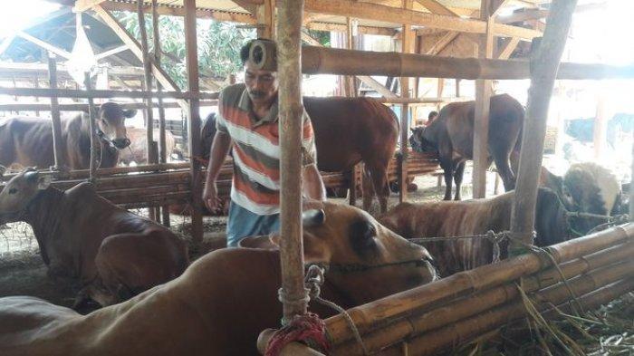 Pedagang Hewan Kurban di Purwakarta Keluhkan Sepinya Pembeli, Namun Harga Jual Justru Dinaikkan