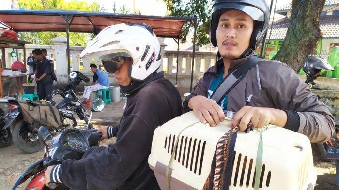 Mudik Pakai Motor Bawa 3 Ekor Kucing, Kepanasan dan Bising di Jalan, Kucingnya Stres Tak Mau Makan