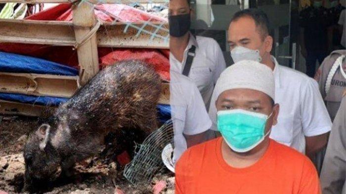 Penemuan babi ngepet yang hebohkan tanah air ternyata hoaks, karangan semata. Adam Ibrahim memakai baju tahanan (kanan).