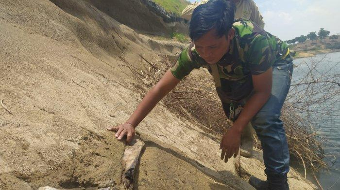 Ada Temuan Fosil Hewan Langka di Jawa di Waduk Saguling, Hengky Kurniawan: Tambah Wisata Baru di KBB