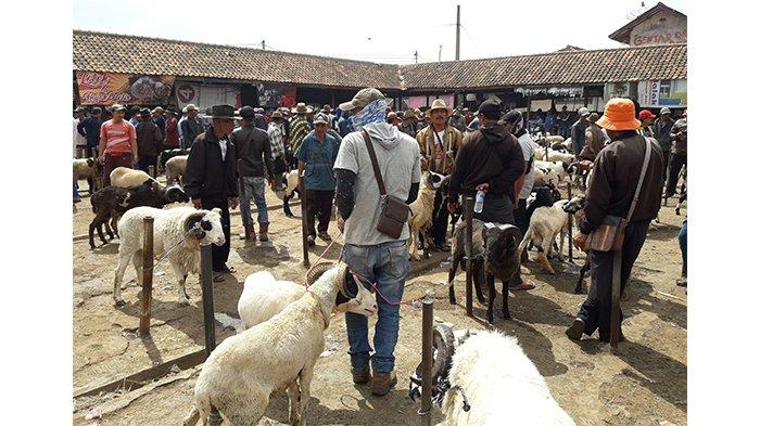Peternak di Tambaksari Ciamis Mulai Resah, 17 Ekor Domba Raib dari Kandang