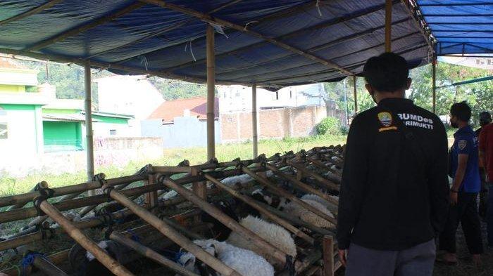Pedagang Hewan Kurban di Sumedang Menjerit, Penjualan Terasa Sulit Akibat PPKM Darurat