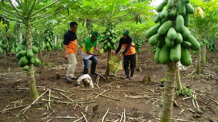 Petani yang Tak Bankable Terbantu Fasilitas Kredit