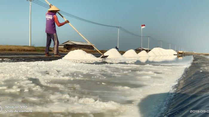 Harga Garam Anjlok Hingga Rp 150/kg, Petambak Garam Merugi dan Ogah Jual Panenan