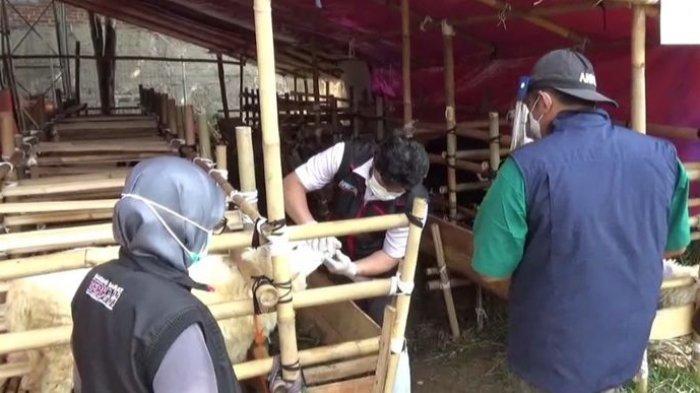Waspada! Puluhan Hewan Kurban di Bandung Barat Sakit dan Cacat, Mulai Mata hingga Cacingan