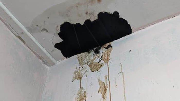 Darah Tiba-tiba Menetes dan Bau Busuk dari Plafon Rumah, Sempat Dikira Mistis, Ternyata karena Ini