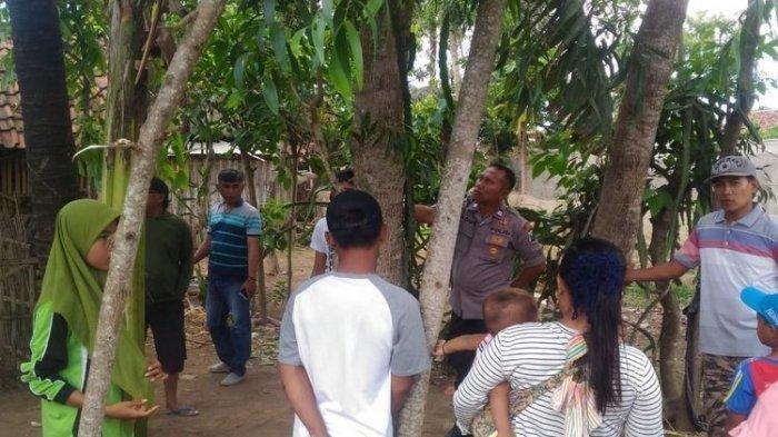 Fenomena Pohon Menangis di Jember, Warga Ramai-ramai Tempelkan Telinga ke Pohon Tersebut