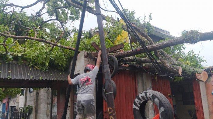 Pohon Besar Tumbang, Nyaris Timpa Pemilik Bengkel, Arus Lalu-lintas di Cianjur-Cipanas Terputus