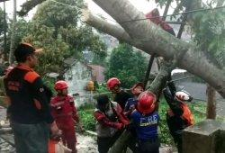 Hujan Deras Disertai Angin Mengguyur Sukabumi, Rumah Entis Rusak Tertimpa Pohon Kedondong
