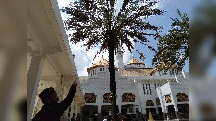 Warga dan Netizen di Tasikmalaya Heboh, Pohon Kurma di Masjid Agung Berbuah, 2 Bulan Lagi Panen
