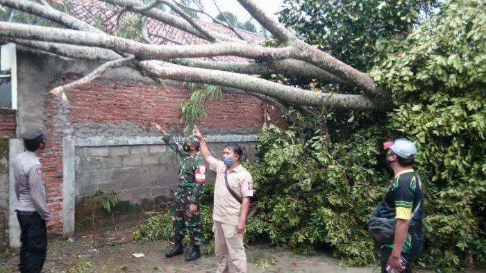 Amuk Angin Kencang Saat Hujan Deras, Pohon Bertumbangan, Enam Rumah Warga Rusak di Banjarsari Ciamis