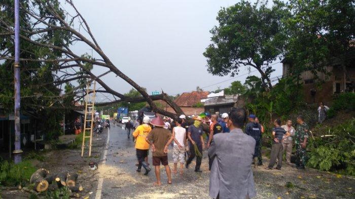 Jalan Nasional Ciamis-Banjar Sempat Lumpuh, Dua Pohon Tumbang Melintang di Jalan