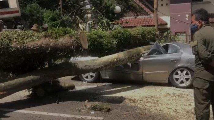 KRONOLOGI DETIK-DETIK Pohon Besar di Bandung Tumbang, Mobil-mobil Ringsek, di Mana Pemiliknya?