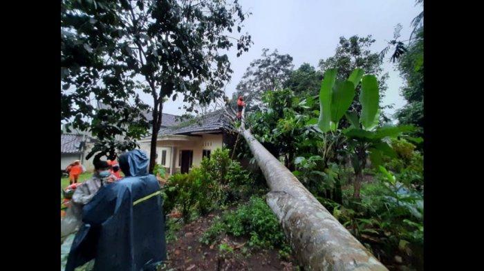 Angin Puting Beliung Melanda Tamansari Kota Tasikmalaya, Pohon Tumbang Timpa Rumah