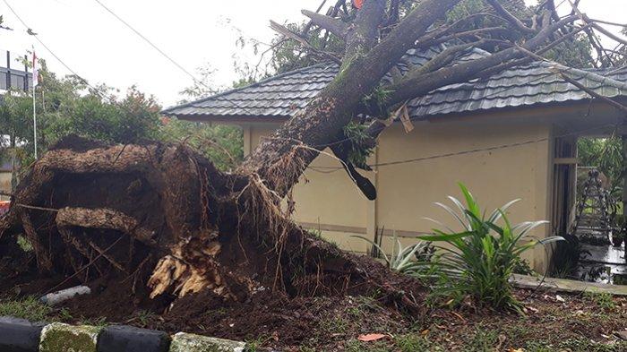 Pohon Tumbang Timpa Bangunan Kecamatan Indihiang, Beruntung 9 Warga di Dalamnya Selamat
