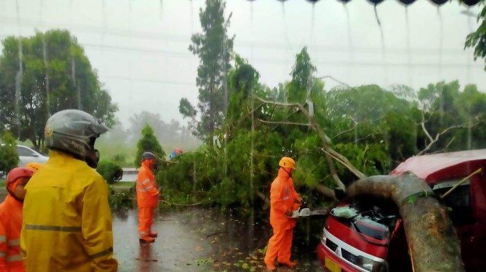 Hujan Deras Disertai Angin Kencang, Pohon Tumbang Timpa Angkutan Umum di Kota Banjar
