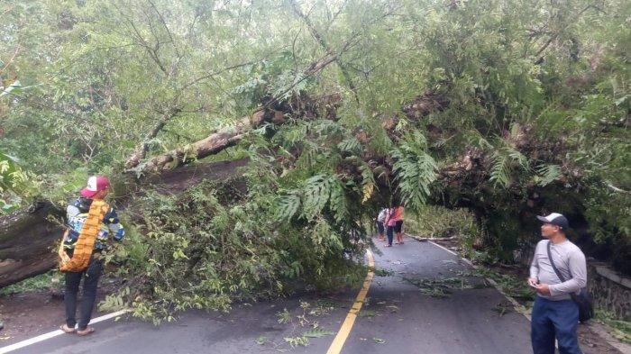Pagi Tadi Pohon Tumbang Tutupi Jalan Sukabumi-Palabuhanratu, Arus Lalu Lintas Sempat Tersendat