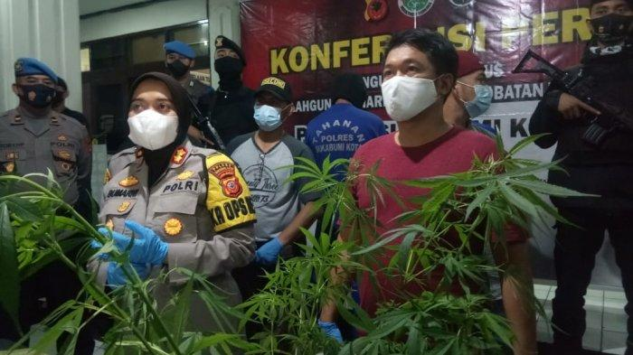 Polres Sukabumi Kota Amankan 20 Pohon Ganja, Ditanam di Lereng Gunung Gede Pangrango