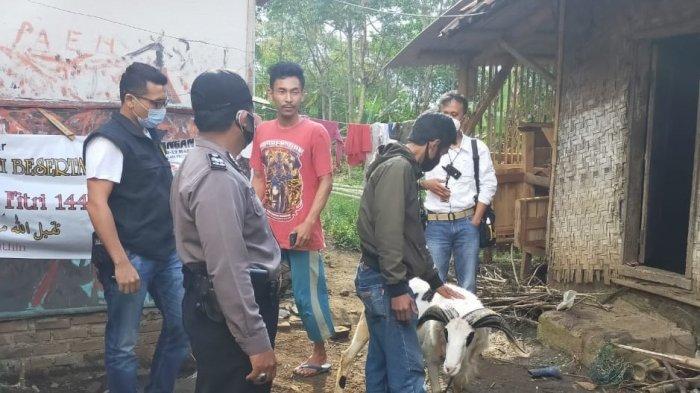 Domba Hendak Dijual Saat Idul Adha Dicuri, Pelaku Ditangkap Usai Dipancing Polisi Lakukan Ini