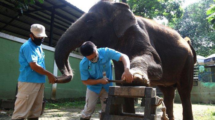 Bandung Zoo Siap Buka Saat Libur Lebaran, Belum Diputuskan, Tunggu dari Pemkot Bandung