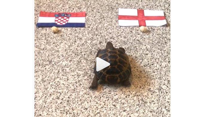Menjelang Laga Kroasia vs Inggris, Roger Si Kura-kura Pilih Negara ini