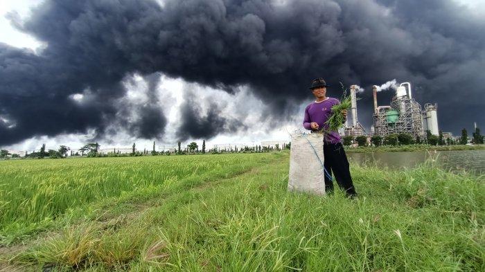 Rasdinah (40), tetap mengarit di areal persawahan di seberang PT Pertamina RU VI Balongan yang terbakar, Selasa (30/3/2021).