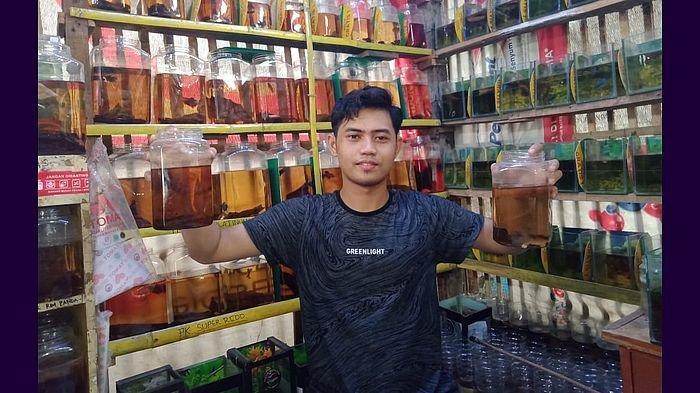 Bisnis Ikan Cupang Bantu Orang Betah di Rumah saat Pandemi,Mahasiswa Ini Raih Jutaan Rupiah Sebulan