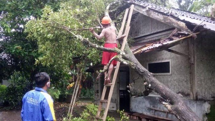 Hujan Lebat Disertai Angin Kencang, Rumah Ahmad Soim di Ciamis Dihantam Pohon Sawo Tumbang