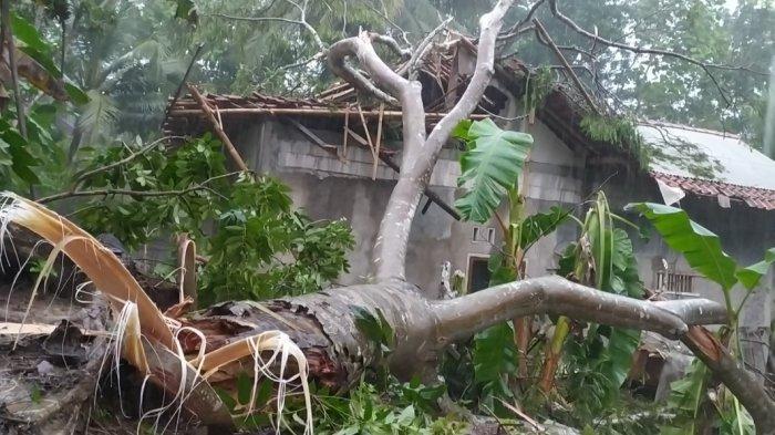Angin Kencang, Saiman Terkunci di Kamar Usai Rumahnya Tertimpa Pohon Tumbang, Pintu Terhalang Batang