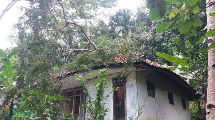 Berencana Direnovasi, Rumah Yayan Keburu Tertimpa Pohon Tumbang Akibat Angin Kencang dan Hujan Lebat