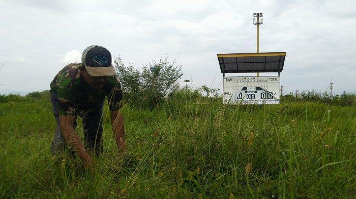 Lapangan Sofbol Bertaraf Internasional Ini Kini Menjadi Tempat Mencari Rumput untuk Pakan Ternak