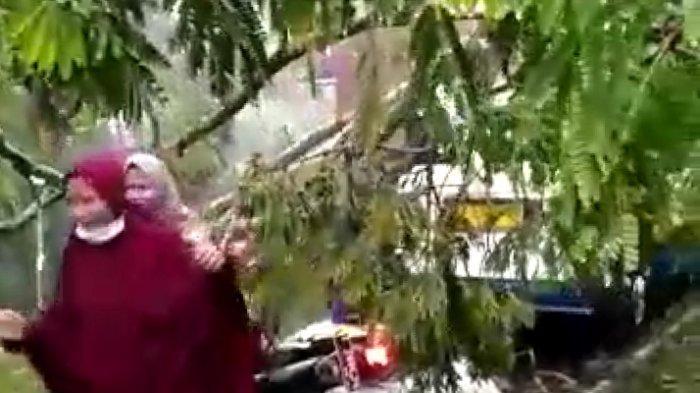 Pohon Tumbang Timpa Angkot di Jalan Bantar Kota Tasik, Belasan Santri di Angkot Menjerit Kaget