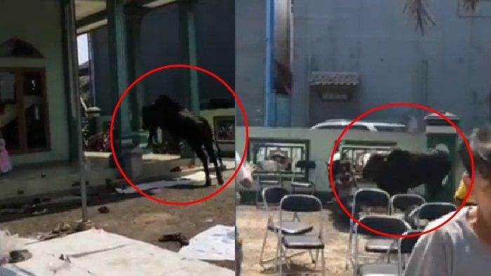 Hendak Disembelih, Sapi Kurban di Cileunyi Bandung Ini Ngamuk, Lari ke Arah Masjid, Warga Histeris
