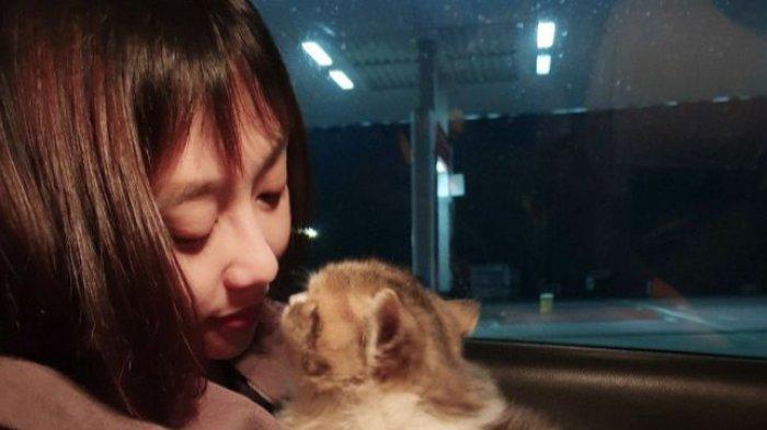 Cara Memelihara Kucing Scottish Fold, Sediakan Ruangan Ber-AC, Jangan Lupa Bawa ke Dokter Hewan