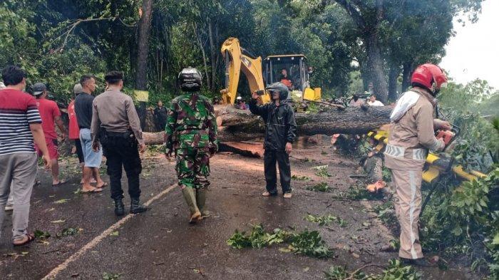 Hujan dan Angin Kencang, Pohon Besar di Warungkiara Tumbang, Jalan ke Palabuhanratu Macet