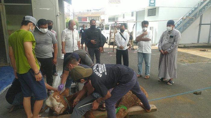 Patungan Karyawan BNI Cabang Bandung ini Hasilkan Dua Sapi dan Lima Domba