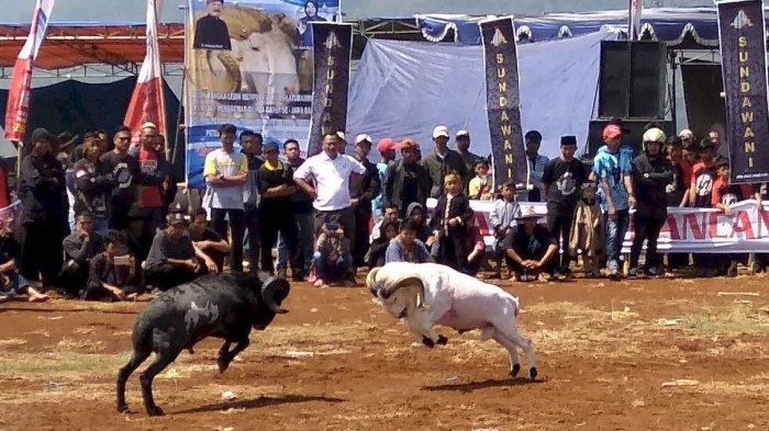 seni-ketangkasan-domba-menjadi-ajang-hiburan-tradisional-warga-cianjur_20180924_143026.jpg
