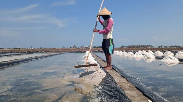 Harga Garam Anjlok Lagi di Indramayu, Sekarang Rp 150 per Kilogram