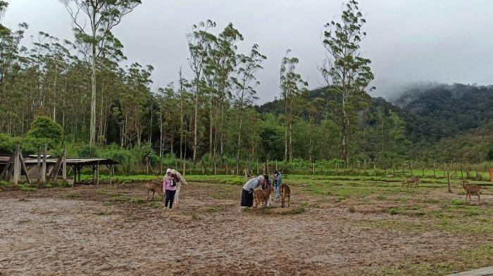 Serunya Wisata Foto dan Memberi Makan Rusa di Ranca Upas, Kesejukan dan Kesegaran Alam b