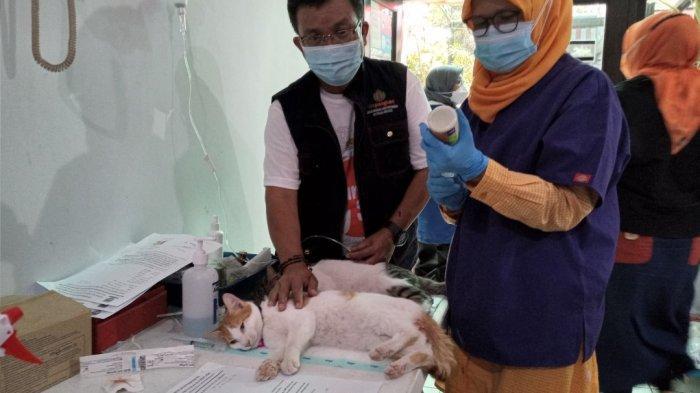 Warga Bandung, Ada Vaksinasi Rabies dan Sterilisasi Gratis di Kantor DKPP, Berikut Jadwalnya