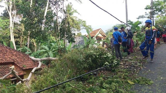 Sudah Masuki Musim Hujan, Rumah Pak Guru di Ciamis Tertimpa Pohon Tumbang Seusai Hujan Deras
